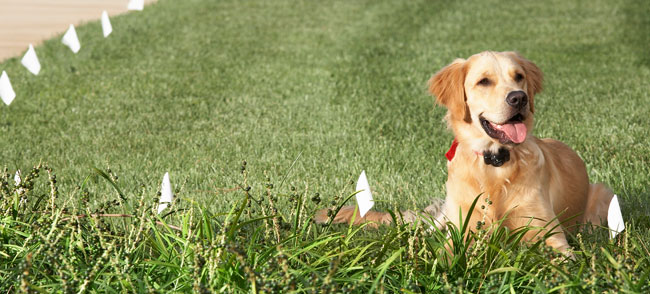 Wireless Dog Fence Guide - Buyer's Guide 5 Wired