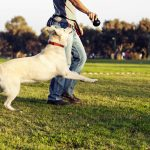 Best Wireless Dog Fence With A Remote Trainer