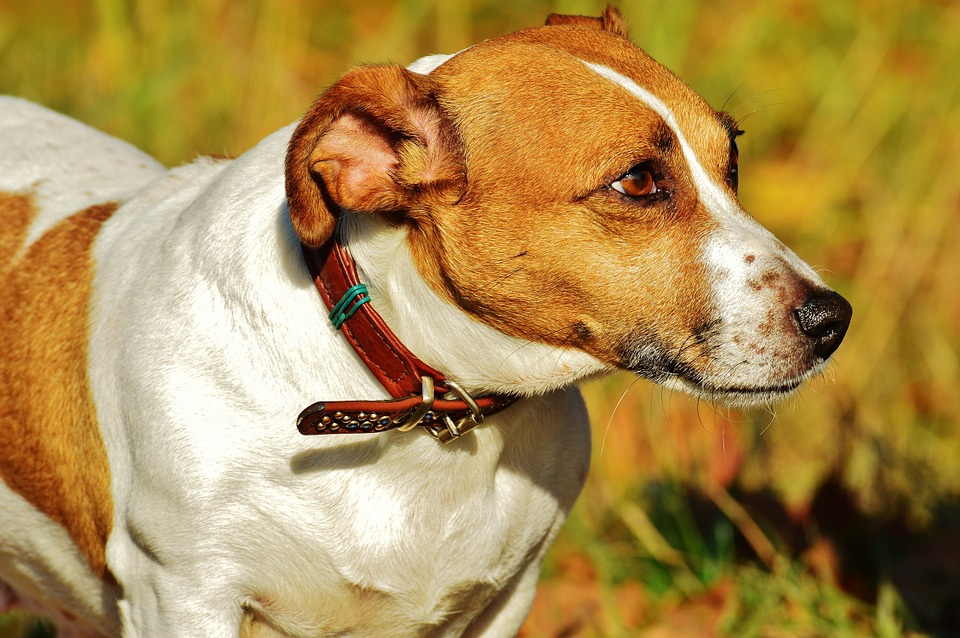 best wireless dog fences with collar