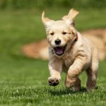 Best Wireless Dog Fence With 2-Acre Coverage