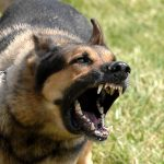How To Stop Your Pet Dog From Excessive Barking