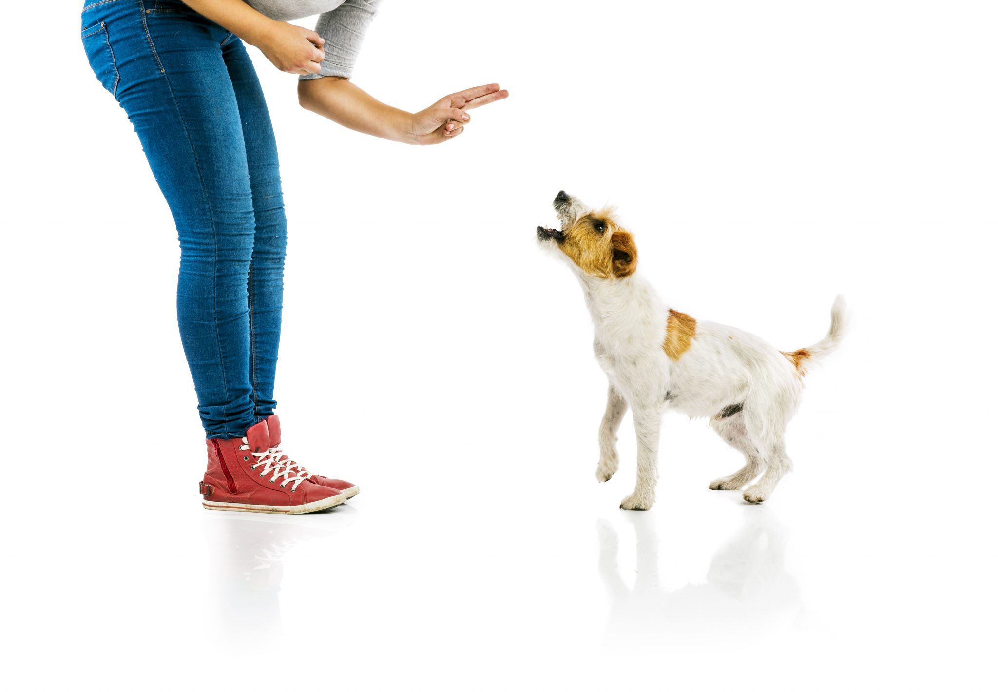 The Ultimate Dog Training Guide 30 Tips and Tricks on How to Train Your Dog2