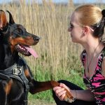 The Ultimate Dog Training Guide
