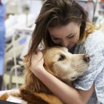How To Get A Therapy Dog
