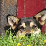 5 Best GPS Dog Fence and Tracking Systems for Extra Peace-of-Mind