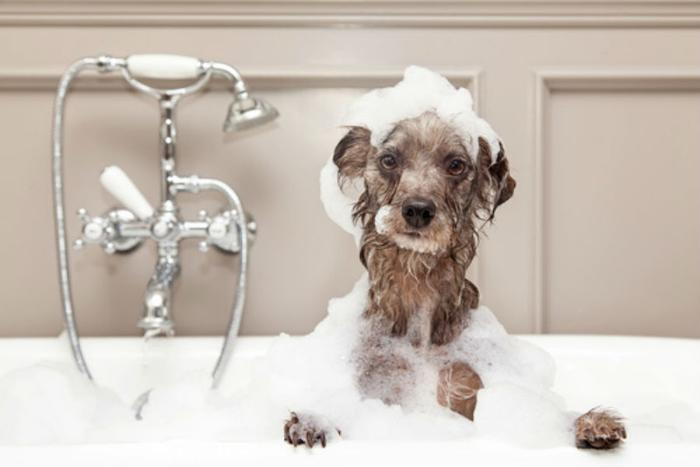 dog Bathe with Shampoo