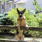 No Dig Fence for Dogs: 10 Of The Best Brands For Your Pooch