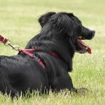 10 Best Dog Harness: Keep Your Dog In Control Always