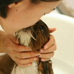 How To Bathe A Dog: Tips To Make Bathing Easier, Faster and Neater