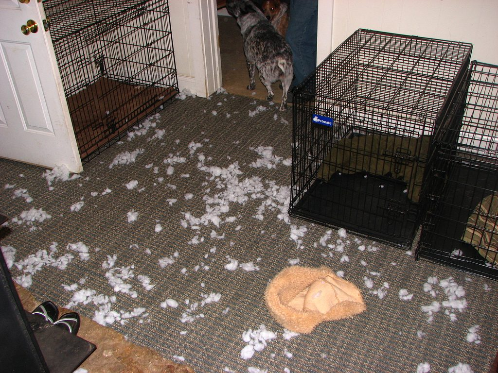 black wire dog crates destroyed bed on the floor with white fluff everywhere