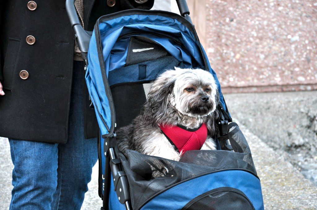 Best Stroller And Carriages For Dogs