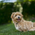 7 Of The Best Electronic Dog Fence Choices On The Market