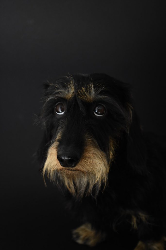 black and brown dog looking sad