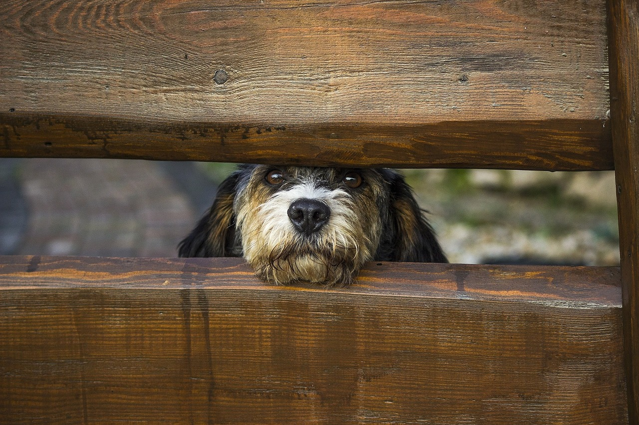 Dog peeking from a fence