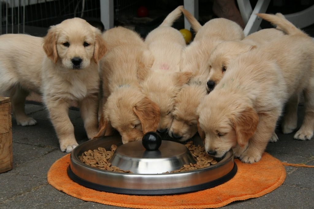 golden retriever puppies eating around a large bowl on an orange rug