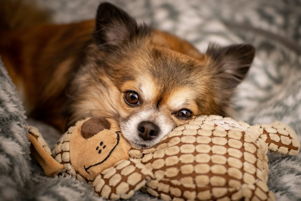 puppy snuggling with brown toy on grey blanket