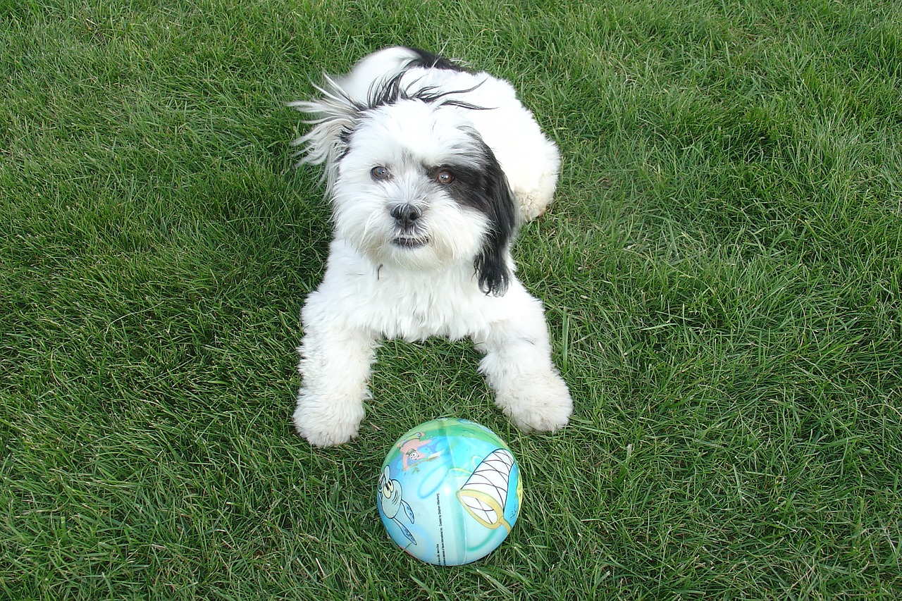 Dog sitting on the grass with a ball