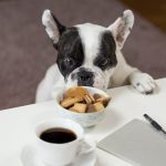 Best Puppy Foods: Our Top 10 For A Healthy Furbaby