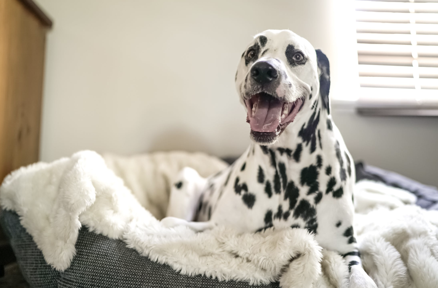 The 6 Best Dog Beds