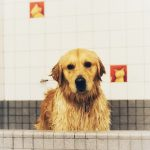 Top 8 Best Dog Shampoo