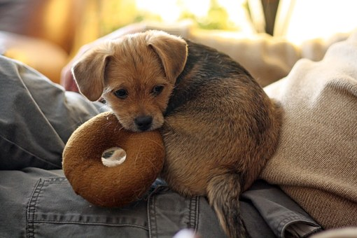 puppy with a donut toy