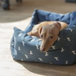 The 7 Best and Most Indestructible Dog Bed Picks You Can Buy