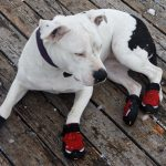 Keep Spot's Pads Warm This Winter With These Dog Boots