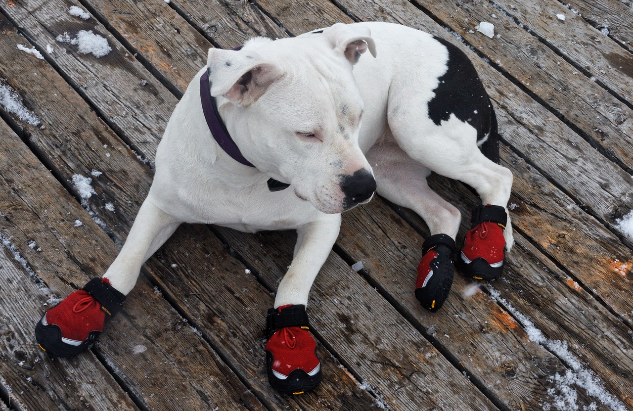 Dog wearing cute red boots