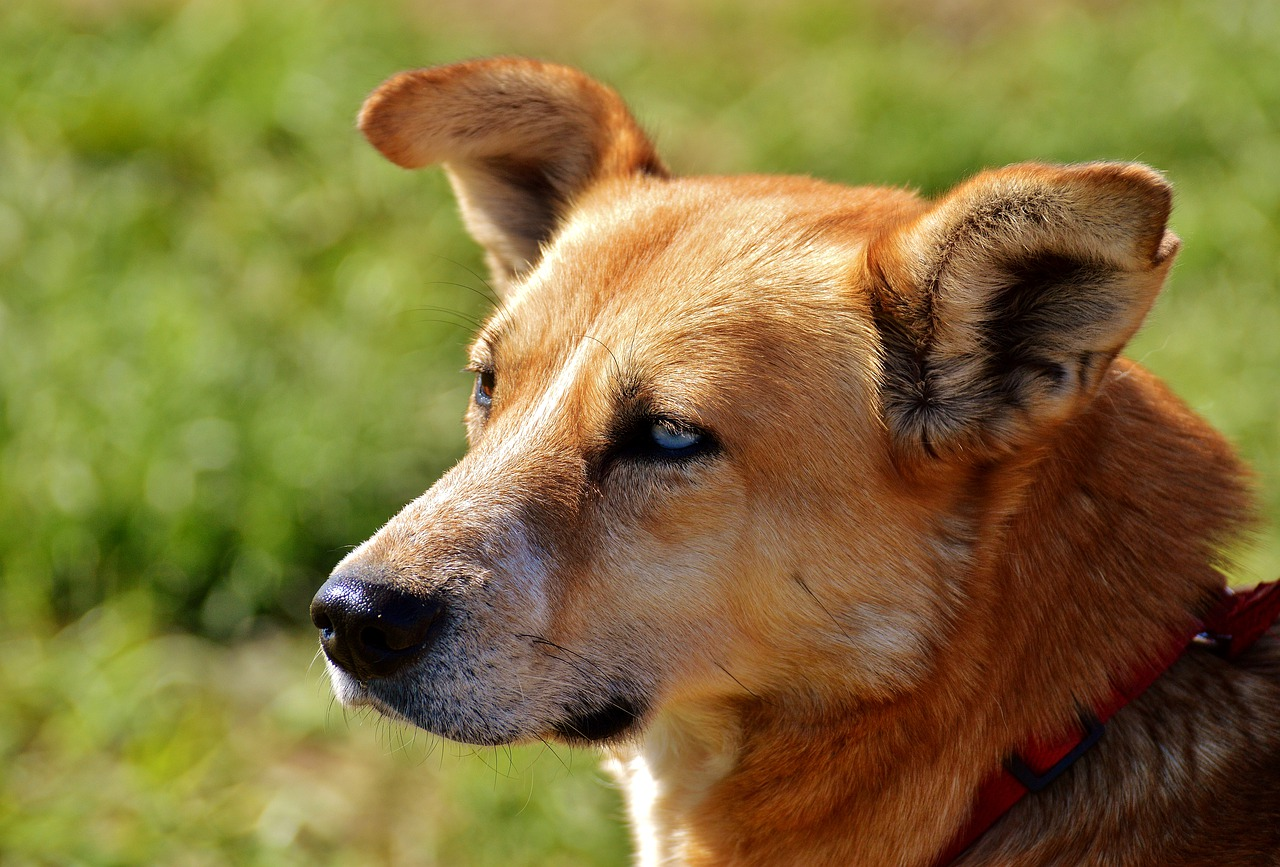 Get Rid of Pests with the Best Flea Collar for Dogs
