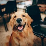 The 7 Best Dog Dewormer Formulas to Protect Your Furry Friend
