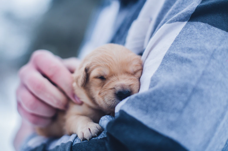 new puppy in a person's arms