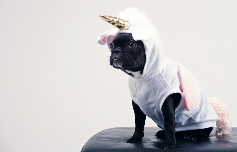 Top 25 Halloween Pet Costumes To Kick Your Holiday Up a Notch