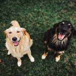 Basic Obedience Training for Adult Dogs: What You Need to Know