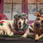 15 Gift Ideas for Your Dog (Or Any Beloved Pup in Your Life)