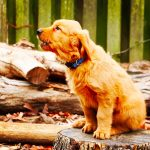 Barking Problems: Bark Collar, Clicker Training, and the Right Choice for You