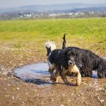 Mud Control for Dogs: Take Your Fur Baby With, and Keep Nature Outside