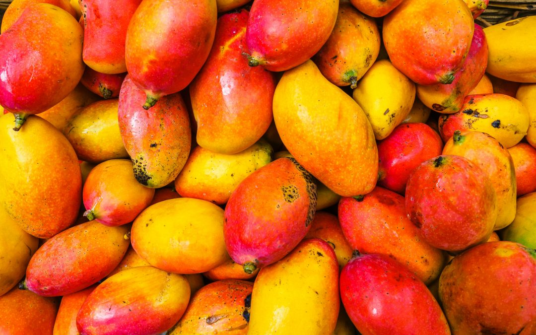 Can Dogs Eat Mango? Safely Add Variety to Your Dog's Diet